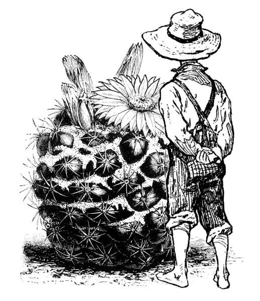 Befriending a Cactus - Razítko na bílé pěně, výrobce LaBlanche, scrapbooking