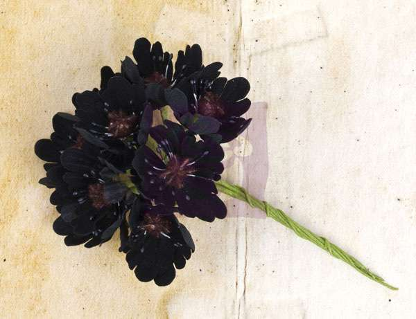 Květiny na scrapbooking - Engraver Flower Stem - Black Prima Marketing